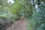 trail,gravina,cinque,querce,puglia,sport,corsa,news